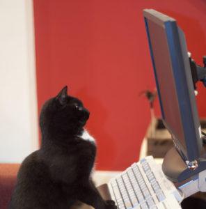 猫大好きなグラフィックデザイナー猫好きウェブデザイナー