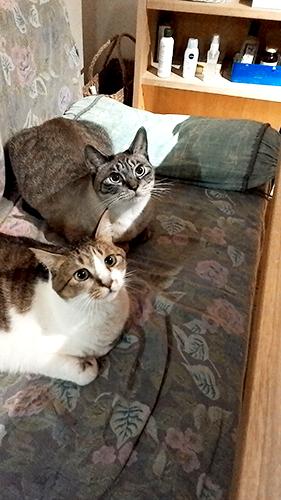 ネコ好きのによる猫好きのための対面式デザインスクール